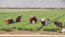 نقابة العمال الزراعيين دعت الحراك الى إعطاء فرصة للحكومة