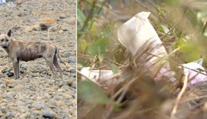 كلاب ضالة تأكل طفلاً رضيعاً حياً!