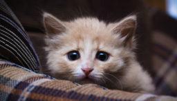 دار عجزة للقطط! (صور)