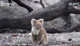 أستراليا.. استمرار عمليات إنقاذ الحيوانات عقب اندلاع الحرائق