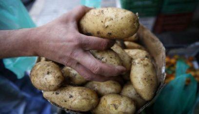 استيراد البطاطا المصرية بين غلاء الأسعار والشحّ