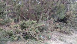 مجهولون قطعوا أشجارا حرجية في خراج بينو