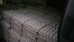 ضبط كمية كبيرة من البيض المهّرب في عكار