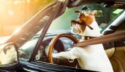 الشرطة الأميركية تطارد سيارة يقودها كلب على طريق سريع…
