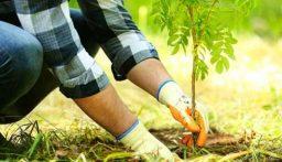 """مصلحة الزراعة في بعلبك الهرمل دعت مزارعي العنب والزيتون والبندورة إلى تقديم طلباتهم للحصول على الجنزارة ومادة """"BT"""""""