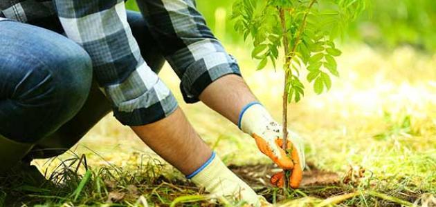 تجمع مزارعي الجنوب طالب وزارة الطاقة بتوفير مادة المازوت للمزارعين