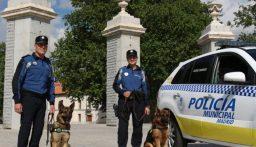 بالفيديو: شرطة إسبانيا تعالج كلابها بجلسات موسيقيّة!