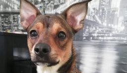 الولايات المتحدة تحظر استيراد الكلاب من 113 دولة بينها لبنان