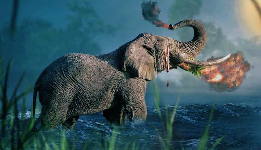 """""""فاكهة مفخخة"""".. حادثة انثى الفيل تهز العالم! (صور)"""