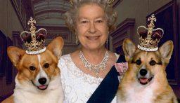 كلاب الملكة إليزابيث لهم قائمة طعام ومقبرة خاصة بالأراضي الملكية