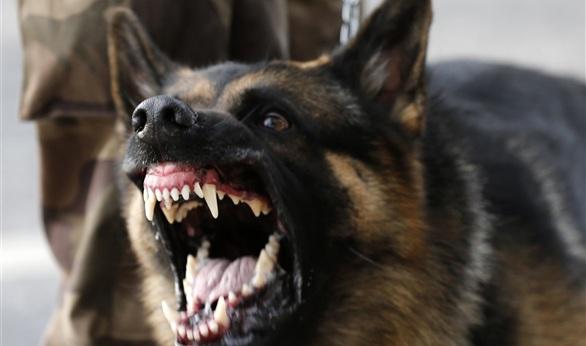 مبلغ من المال لكل من يمسك بكلب شارد في الاردن