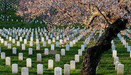 بالفيديو: اختراع جورب يحول جسدك إلى شجرة بعد الوفاة…