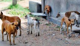 معالجة ظاهرة الكلاب الشاردة في الميناء بتوجيهات من نهرا