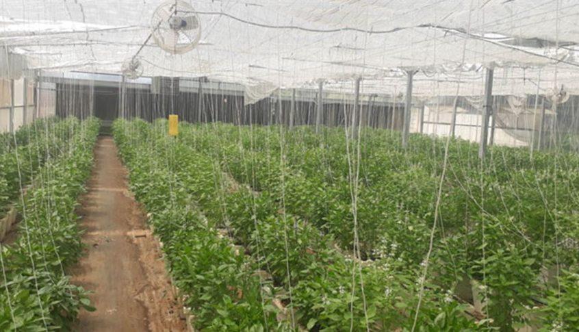 رئيس مصلحة الزراعة في عكار دعا الى التزام إجراءات الوقاية