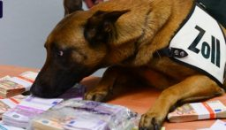 كلبة تحبط تهريب ربع مليون يورو!