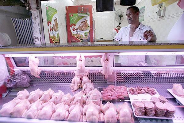صدر الدجاج المدعوم يغطّ ويطير!