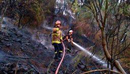 إهماد حريق في حرج في كسروان