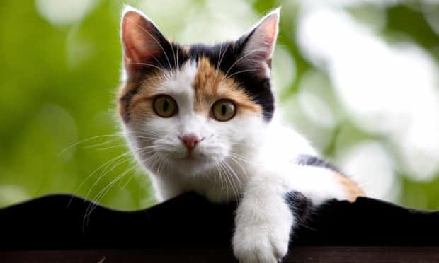 بعد الكلبين.. قطة تنضم للبيت الأبيض مع انتقال عائلة بايدن