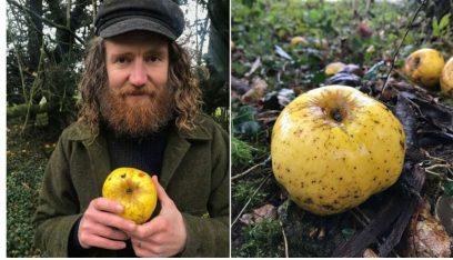 العثور على نوع غريب وجديد تماماً من التفاح!