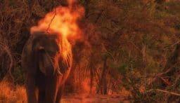 بالفيديو: اضرام النار بفيل يثير غضباً في الهند