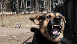 بالفيديو: إقالة ضابط أميركي بعد اعتدائه على أحد كلاب التدريب…