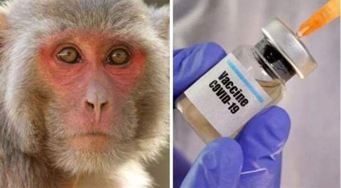 صمم خصيصا للحيوانات.. سان دييغو الأميركية تطعم القرود ضد كورونا