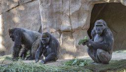 """حملة تلقيح ضد كورونا في حديقة حيوانات """"سان دييغو"""""""