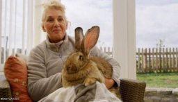 """سرقة """"أضخم أرنب في العالم"""".. وهذه مكافأة من يعيده!"""
