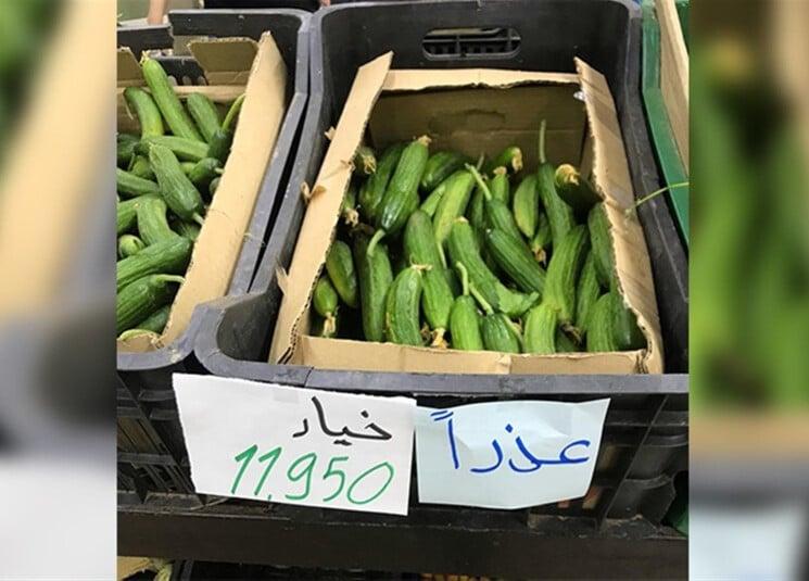 cucumber-lebanon