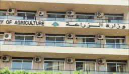 وزارة الزراعة توقف باخرة أرز فاسدة في مرفأ طرابلس!