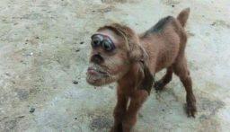 ماعز برأس قرد يثير الرعب في مصر!