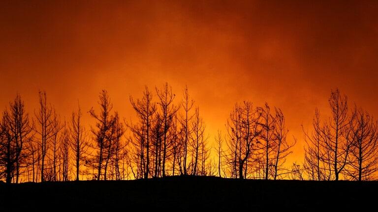 الرئاسة التركية: حرائق الغابات كارثة وطنية.. واليونان تعرض المساعدة