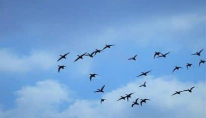 فوز المصور ميشال صوان المهتم بتصوير الطيور المهاجرة بمسابقة بيردلايف الشرق الأوسط