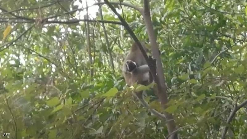 بالفيديو: قرد يخطف جروًا صغيرًا!